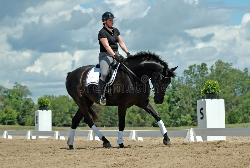 Dressage fotografia stock