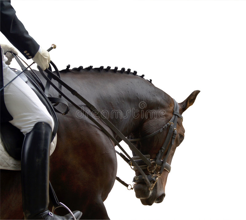 Download Dressage Competitor stock photo. Image of compete, horse - 4011884