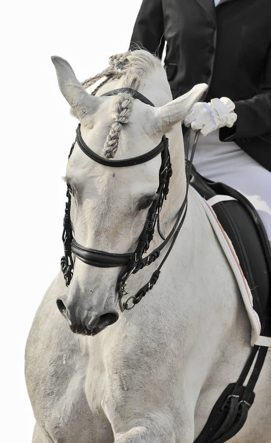 Dressage do cavalo branco foto de stock royalty free