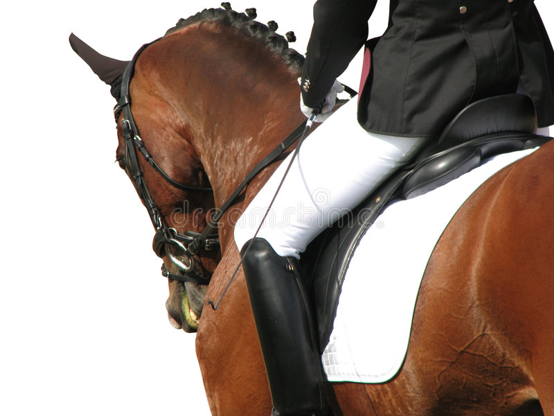 Dressage Elegance (with path) royalty free stock photos