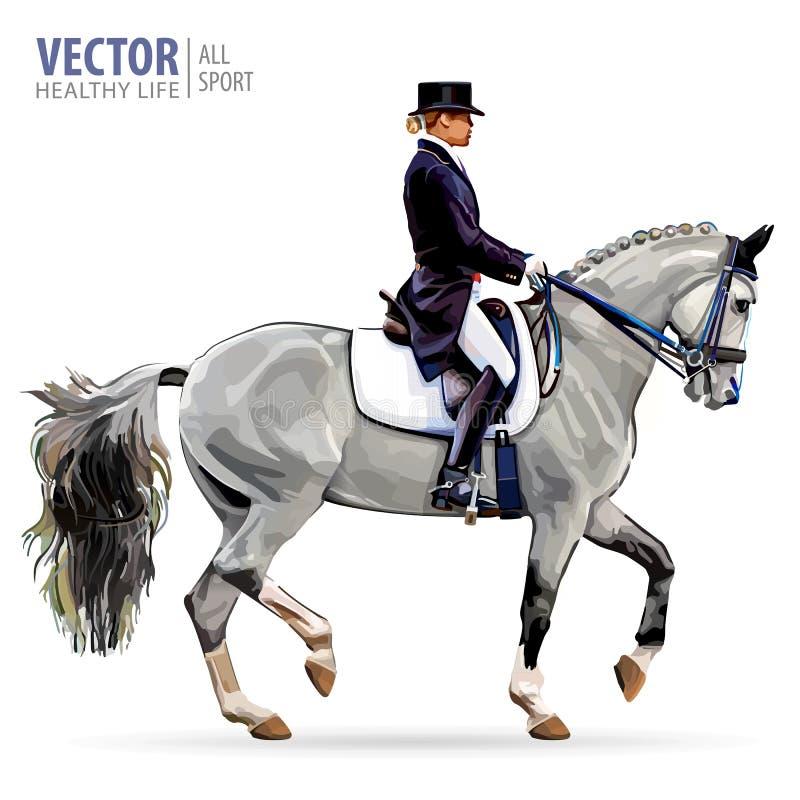 dressage equestrian końscy konie target491_1_ polo jeźdzów sylwetki bawją się wektor Horsewoman dżokej w jednolitym jeździeckim k ilustracja wektor