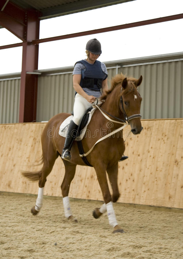 Dressage Horse. Woman riding and schooling dressage horse indoors. The horse is equipped with draw-reigns royalty free stock images