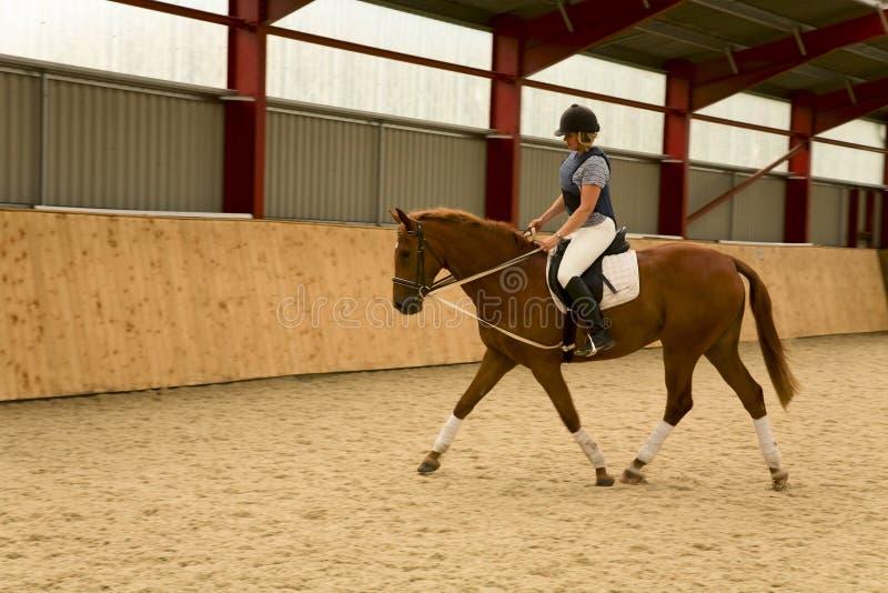 Dressage Horse. British warm blood dressage gelding being schooled by horse woman in indoor school royalty free stock image