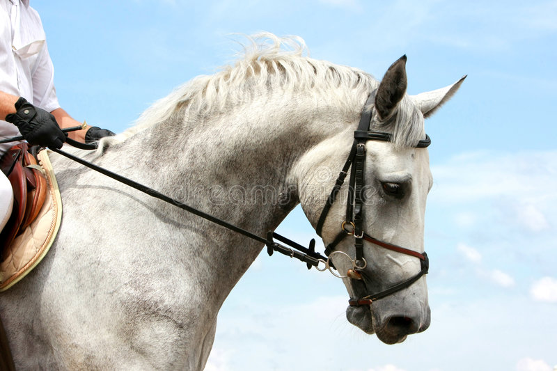 Download Dressage horse stock photo. Image of power, holding, equine - 6241924