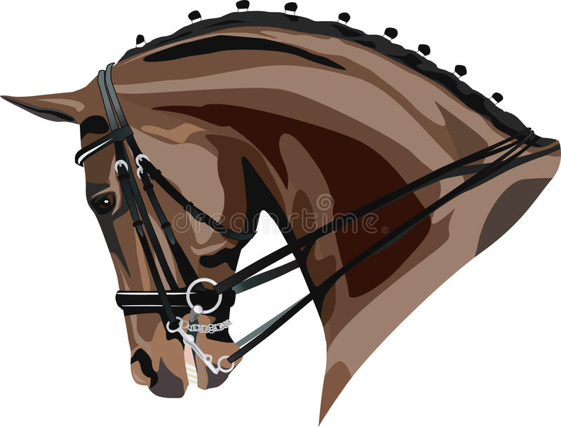 Download Dressage horse head stock vector. Image of elegant, closeup - 26766159