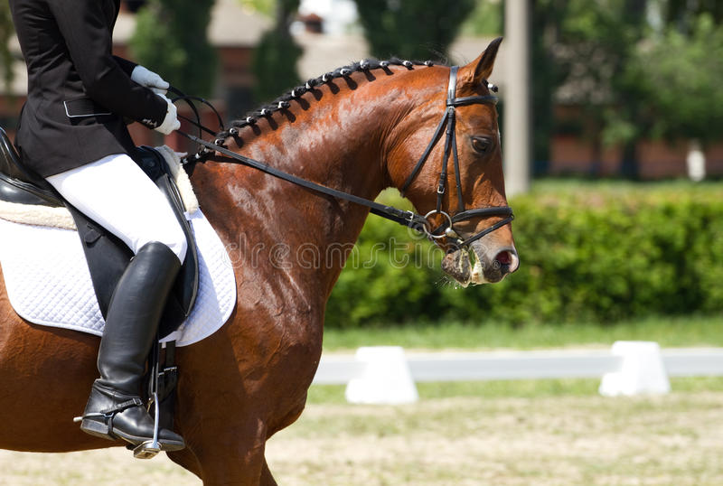 Download Dressage horse and rider stock photo. Image of jump, people - 31395570