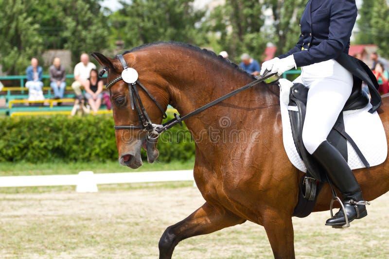 Download Dressage horse stock image. Image of equine, saddle, leather - 39748601