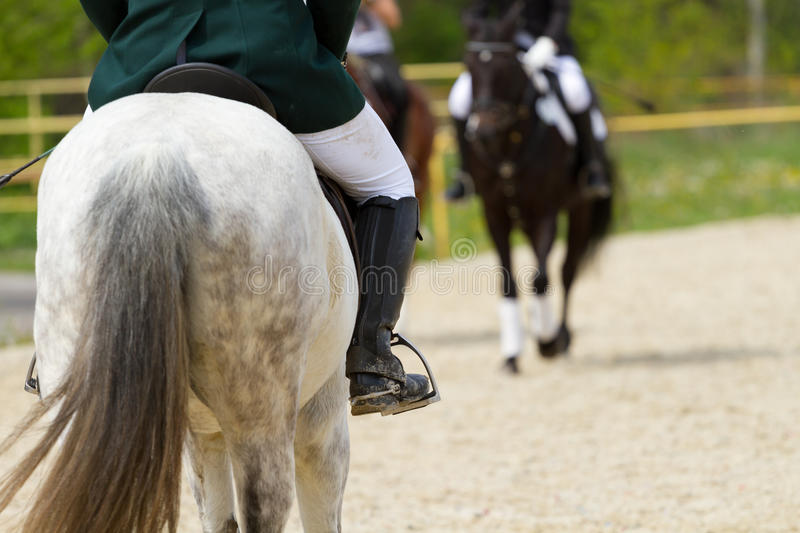 Download Dressage horse stock image. Image of rider, active, concours - 40472555