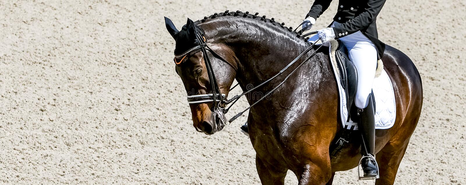 Dressage horse and rider in black uniform stock photo