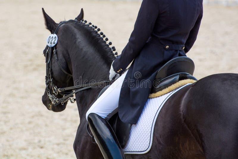 Dressage jeździec na czarnym koniu widok z powrotem zdjęcia royalty free