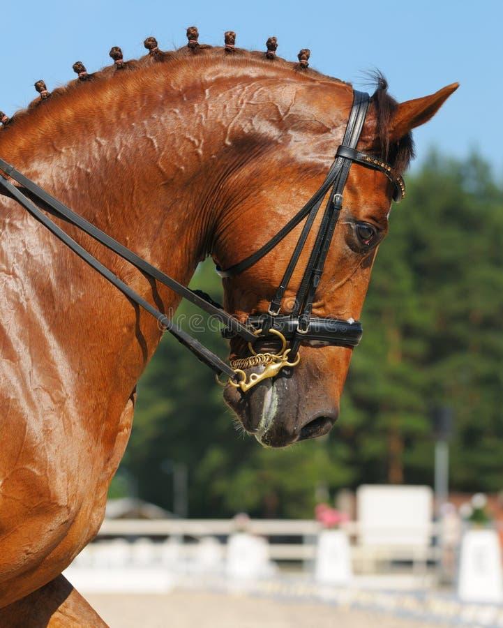 Download Dressage: Portrait Of Sorrel Horse Stock Image - Image of head, nature: 20167427