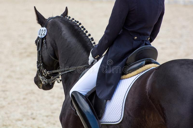 Dressage rider on a black horse. View from the back. Beautiful and elegant dressage rider on a black horse is executing a dressage test. The rider is wearing a royalty free stock photos