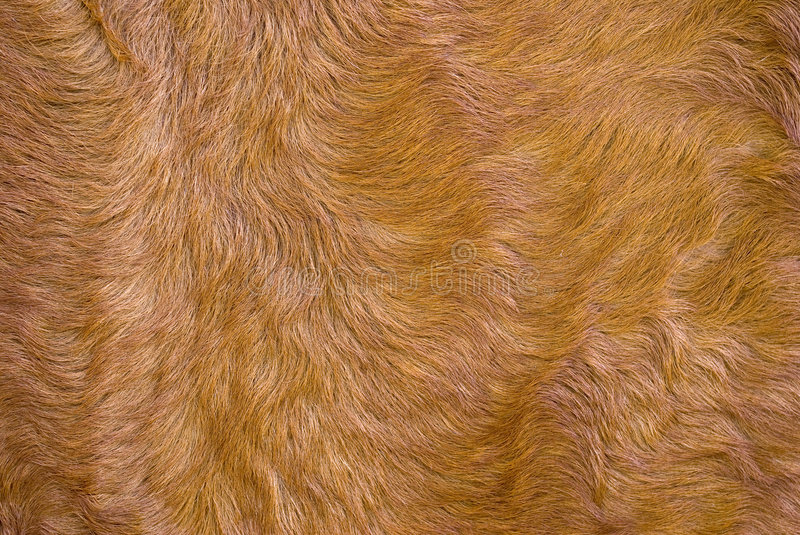 Download The dressed fur. stock image. Image of horse, domestic - 3381249
