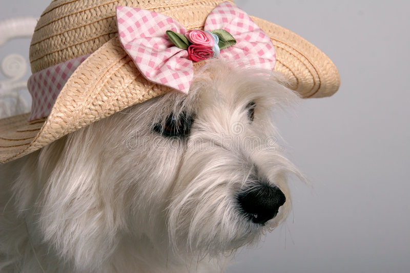 Download Dressed for spring stock photo. Image of silly, spring - 538976