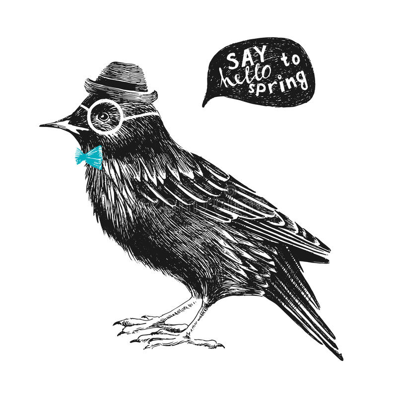 Dressed up starling. Dressed up hand drawn starling royalty free illustration