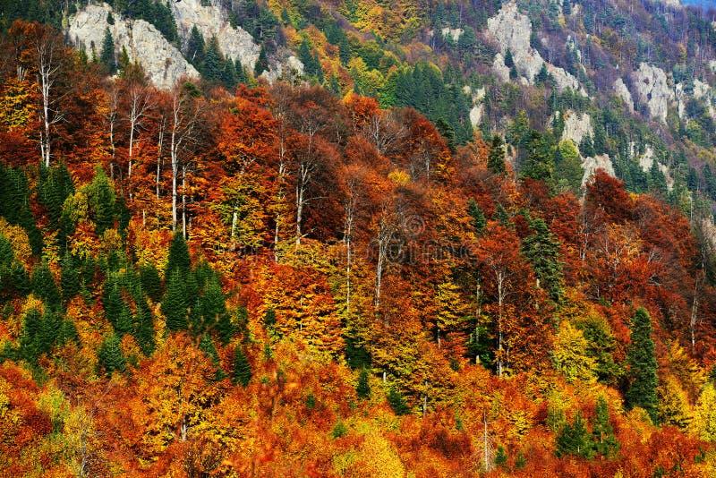 Dressesd del bosque en colores del otoño fotos de archivo libres de regalías