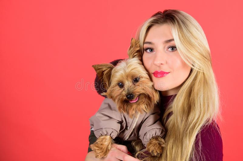 Dressing dog for cold weather. Make sure dog feel comfortable in clothes. Apparel and accessories. Girl hug little dog. In coat. Woman carry yorkshire terrier royalty free stock images