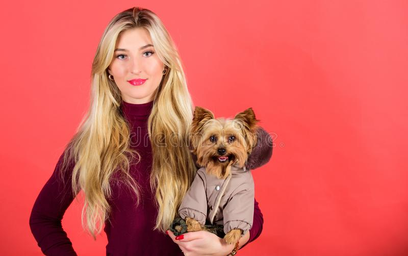 Dressing dog for cold weather. Which dog breeds should wear coats. Girl hug little dog in coat. Woman carry yorkshire. Terrier. Make sure dog feel comfortable stock photography
