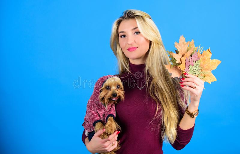 Dressing your dog for cold weather. Dogs need clothes. Which dog breeds should wear coats. Woman carry yorkshire terrier. Girl attractive blonde hug cute dog stock photos