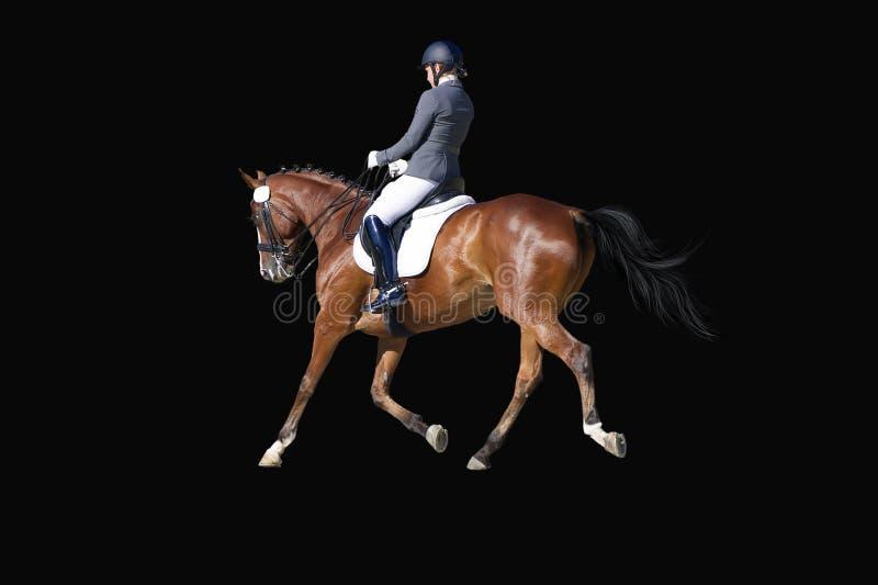 Dressurreiter-Portrait auf Schwarz im Wettbewerb lizenzfreies stockfoto