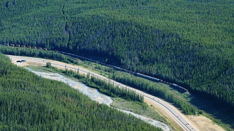 Drev i Kanada arkivfoto