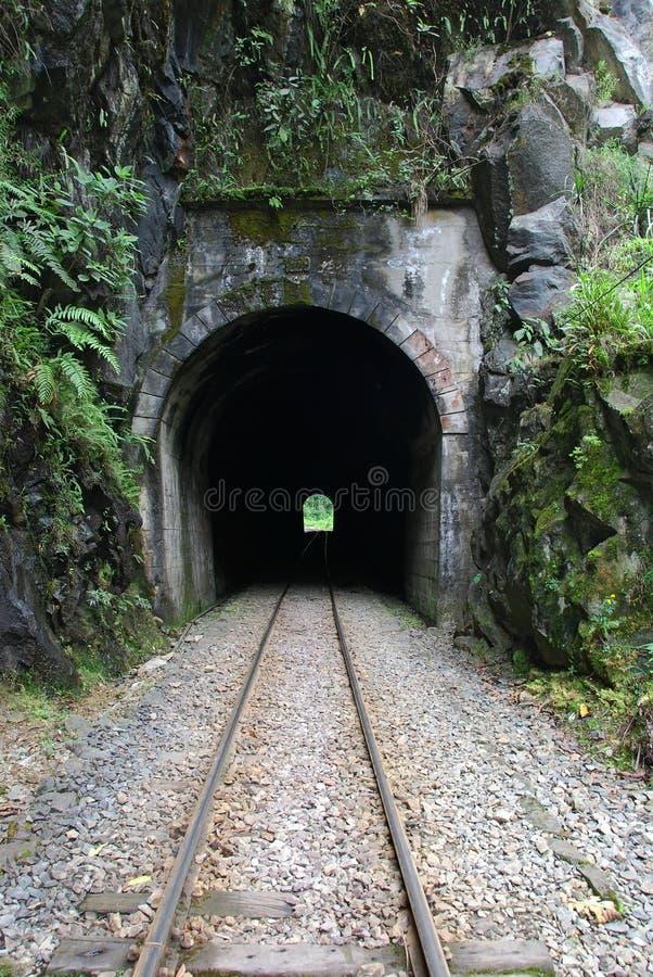 drevtunnel royaltyfri bild
