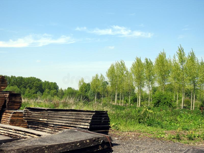 Drewna palowy suszarniczy out obrazy stock