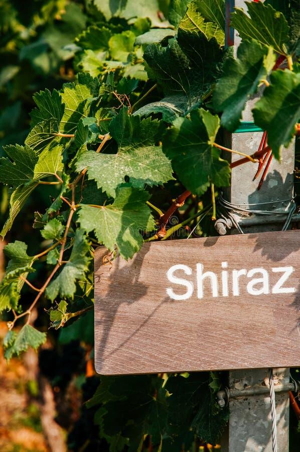 Drewna Shiraz szyldowy winogrono i winograd z zielonymi liśćmi zdjęcie royalty free