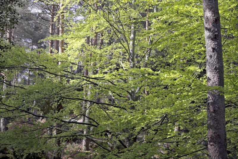 Drewna w wiośnie obraz stock