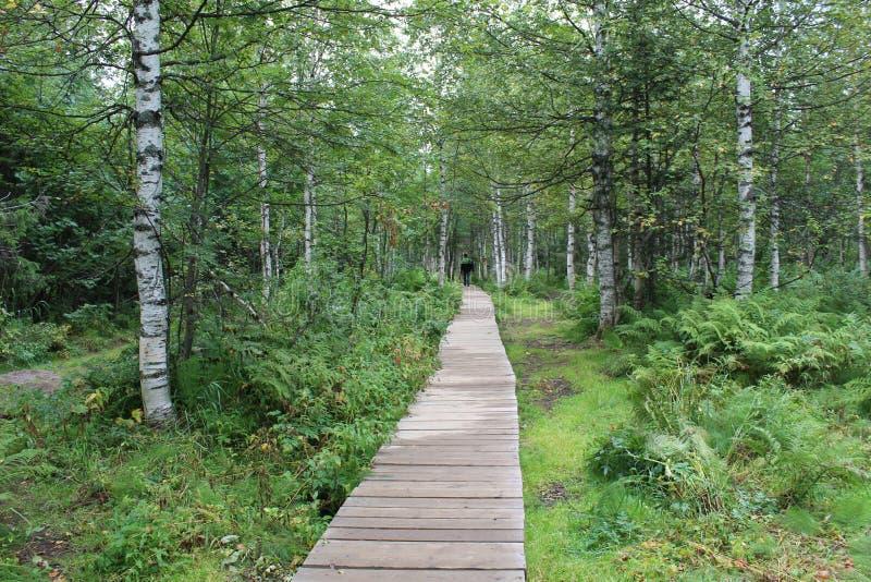 Drewniana ścieżka las zdjęcia royalty free