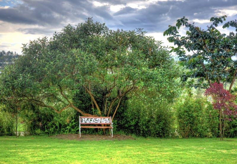 Drewniana ławka w pięknym parku obraz stock