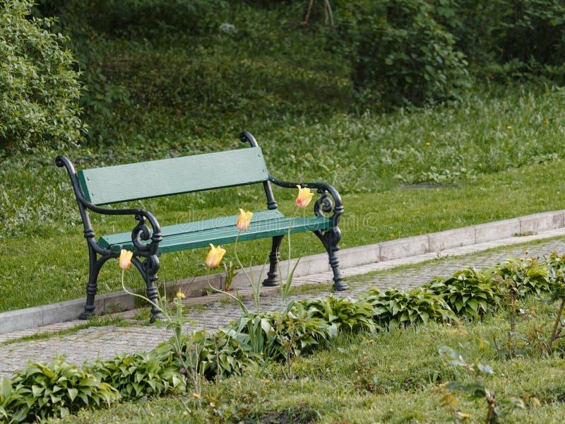 Drewniana ławka z żółtymi tulipanami w wiosna ogródzie zdjęcia royalty free