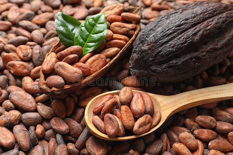 Drewniana łyżka ziarna i kakao strąki zdjęcia stock