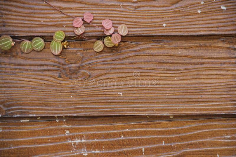 Drewniana ściana i liść dla tła zdjęcia stock