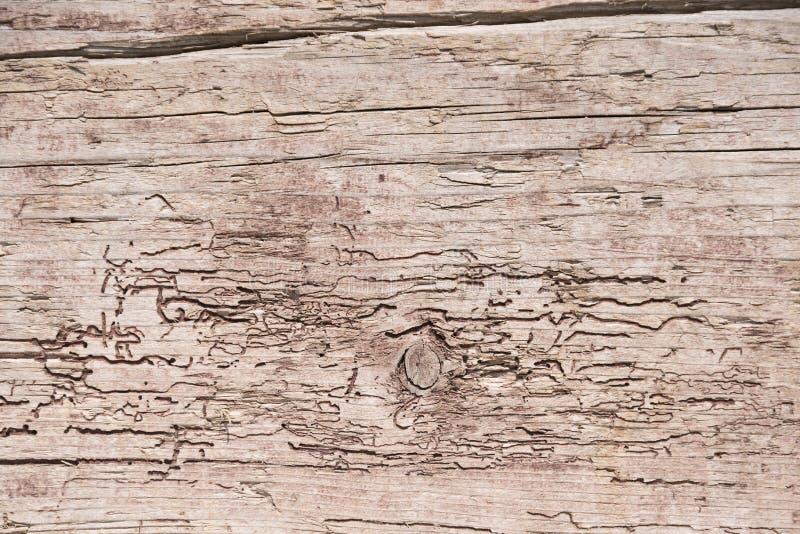 Drewniana ściana nadgryzająca i wietrzejąca obrazy stock