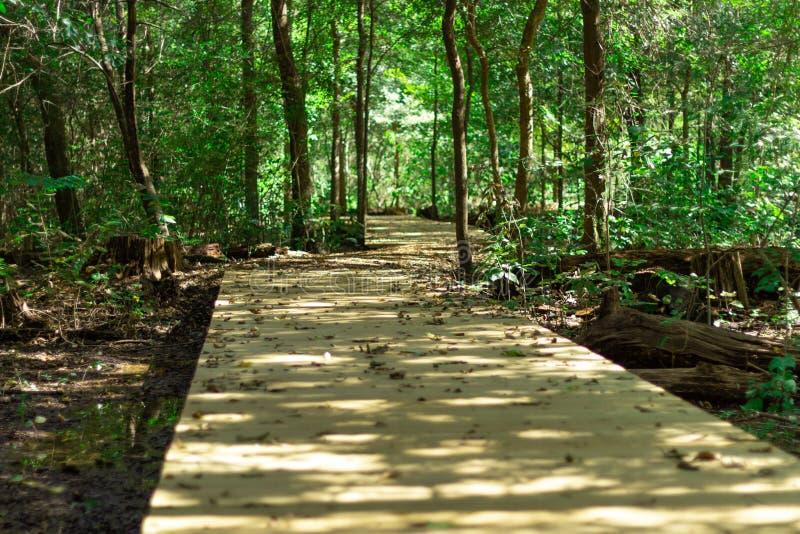 Drewniana ścieżka nad bagnem i przez drzewa obrazy stock