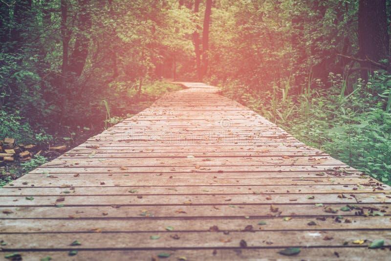 Drewniana ścieżka, sposób, ślad od desek w lasu parku, perspektywa, stonowany wizerunek obrazy stock