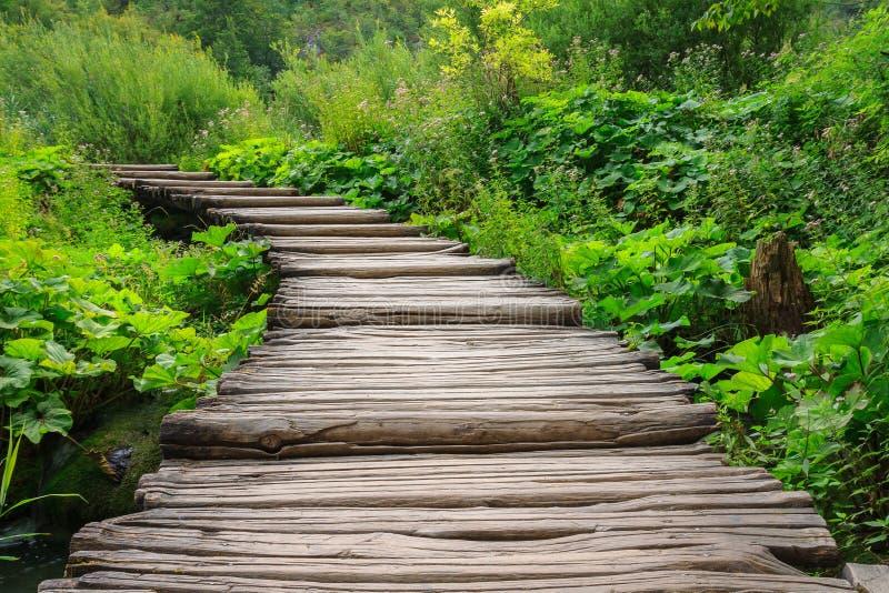 Drewniana ścieżka w Plitvice parku narodowym w Chorwacja zdjęcia stock