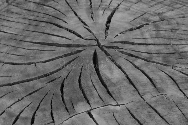 Drewniana bagażnik tekstura zdjęcia royalty free