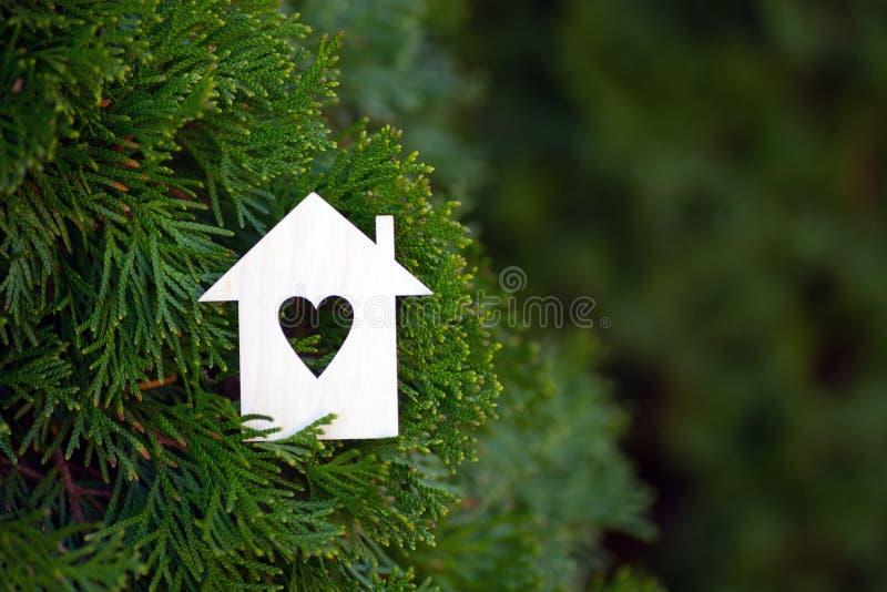 Drewniana domowa ikona z dziurą w formie otaczającej zielonym tui conifer serce rozgałęzia się plenerowego obrazy royalty free
