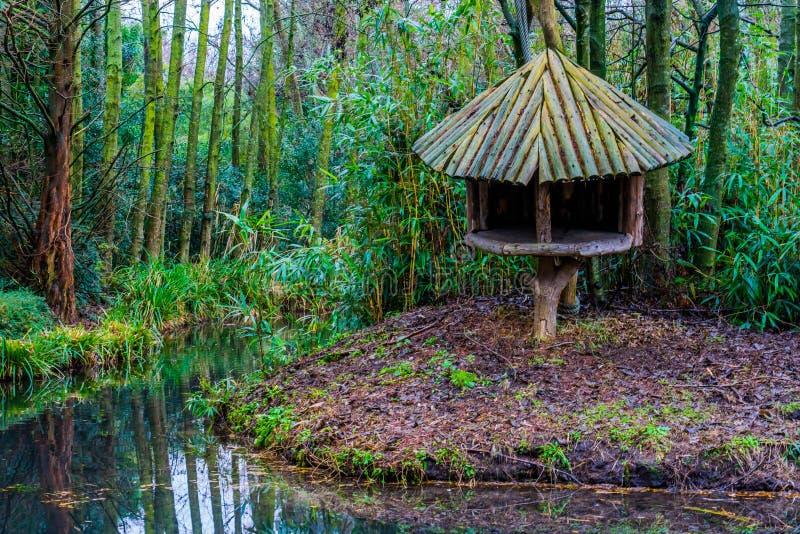 Drewniana drzewna buda na rzecznej stronie w tropikalnym przyglądającym bagno krajobrazie fotografia royalty free