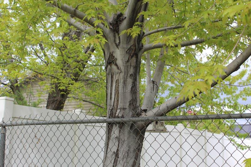 Drewniana drzewnej barkentyny tekstura h zdjęcia stock