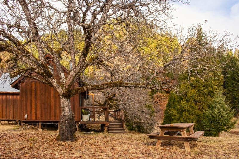Drewniana kabina na stilts z gankowym i pyknicznym stołem w drewnach w zimie z przeszczepiającym orzecha włoskiego drzewem z few  fotografia stock