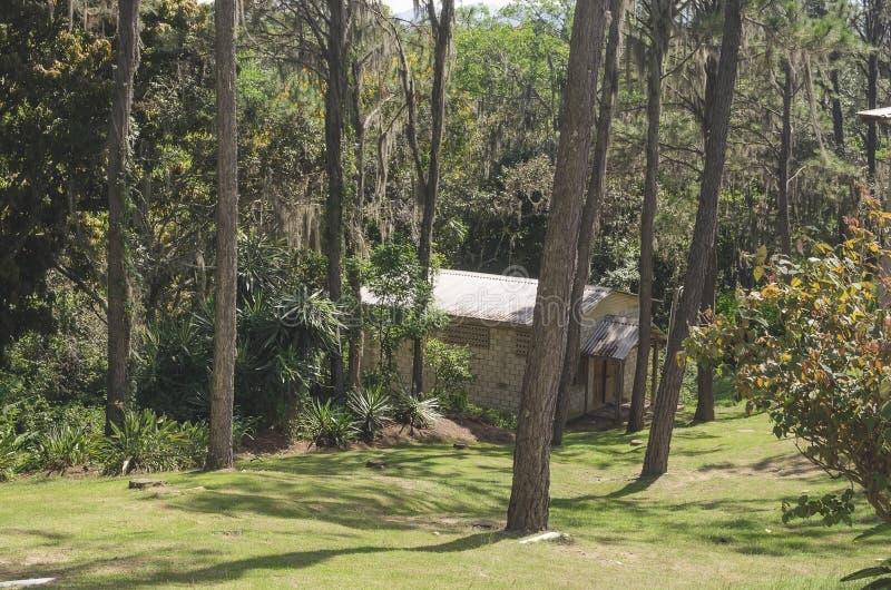 Drewniana kabina w górach otaczać sosnowymi lasami zdjęcia stock