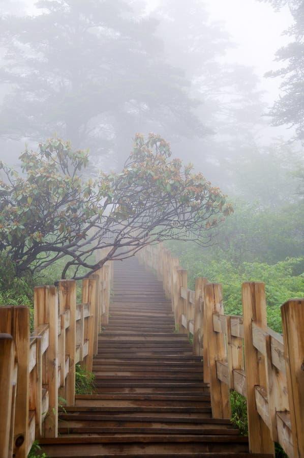 drewniana lasowa ścieżka fotografia royalty free