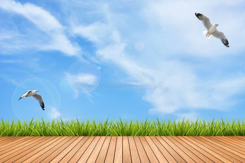 Drewniana podłoga i trawa pod niebieskim niebem i ptakami fotografia royalty free