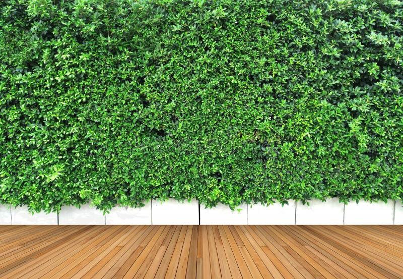 Drewniana podłoga i vertical uprawiamy ogródek z tropikalnym zielonym liściem obrazy royalty free