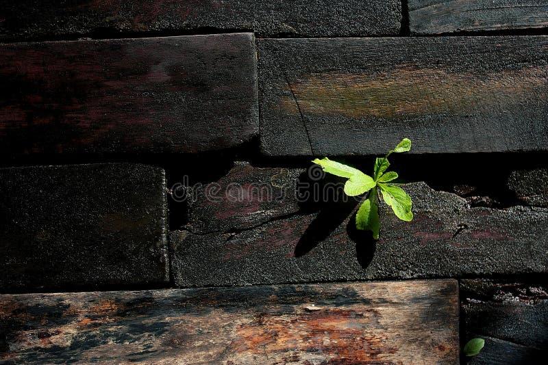 Download Drewniana Podłoga Z Małym Drzewem Zdjęcie Stock - Obraz złożonej z drewniany, materiał: 57671982