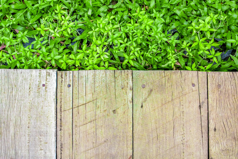 Drewniana podłoga z zielonej rośliny tłem fotografia stock