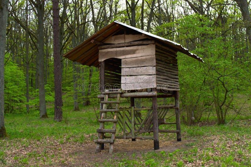 Drewniana polowanie stora w lesie obrazy royalty free